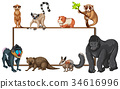 Board template with wild animals 34616996