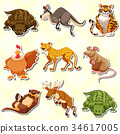 set, many, animal 34617005