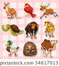animal sticker set 34617013