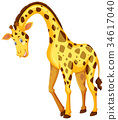 Giraffe on white background 34617040