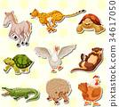 Wild animals on white background 34617050
