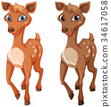 Two fawns on white background 34617058