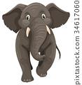 코끼리, 회색, 벡터 34617060