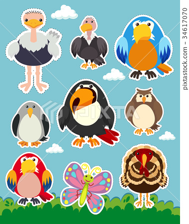 Sticker set with different types of birds 34617070