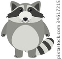Cute raccoon with round body 34617215