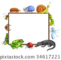 Border template with many insects 34617221