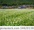 beautiful mountain, kayabuki-no-sato, buckwheat flower 34620138