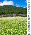 beautiful mountain, kayabuki-no-sato, buckwheat flower 34620144