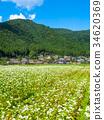 beautiful mountain, kayabuki-no-sato, buckwheat flower 34620369