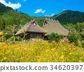 beautiful mountain, kayabuki-no-sato, cosmos 34620397