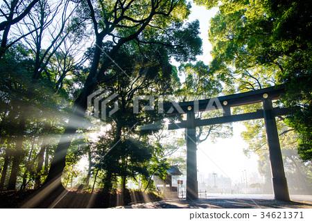 明治神宮神社Otorii在清晨 34621371