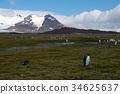 wildlife, king, penguin 34625637