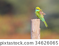 bee eater green 34626065