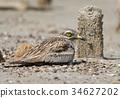 石头 鸟儿 鸟 34627202