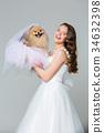 white, canine, spitz 34632398