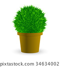Cactus in a pot on white Vector 34634002