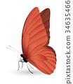 蝴蝶 白色 背景 34635466