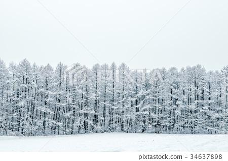 斯诺伊森林,冬天风景。 34637898