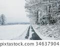 斯诺伊森林,冬天风景。 34637904