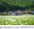 buckwheat field, thatched roof village, beautiful mountain 34640333