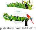 tropical leaves and animal backgrounds vectors 34645013
