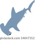 煙熏鯊魚 34647352
