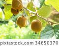 과일, 후르츠, 열매 34650370