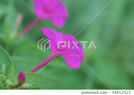 晚妝 花朵 花 34652423