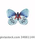 蝴蝶 多彩 水彩畫 34661144