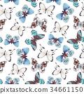 蝴蝶 多彩 無縫的 34661150