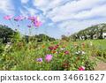 แปลงดอกไม้,ฤดูใบไม้ร่วง,ดอกไม้ 34661627