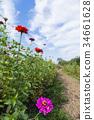 แปลงดอกไม้,ฤดูใบไม้ร่วง,ดอกไม้ 34661628