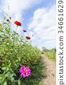 แปลงดอกไม้,ฤดูใบไม้ร่วง,ดอกไม้ 34661629