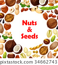 Vector poster of nuts and fruit seeds 34662743