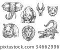 animal, african, africa 34662996