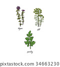 vector flat sketch spices, condiments herbs set 34663230