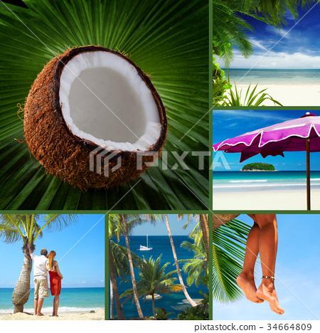 tropic 34664809