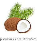 coconuts with palm leaves. Whole and cracked. isolated on the white background. realistic 3d 34666575