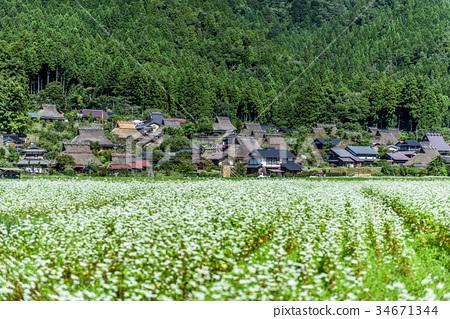 미야마 교토 초가 마을 34671344