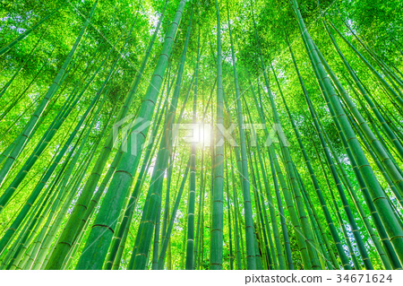 Kyoto Takebayashi 34671624