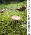 mushroom, mushrooms, autumn 34672593