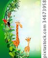 animal vectors summer backgrounds 34673958