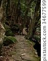녹색, 잎, 산책 34677599