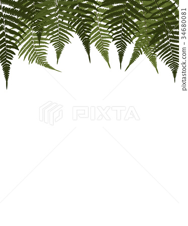 Fern Leaf Vector Background Illustration 34680081