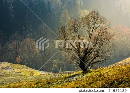 lonely naked tree on hillside 34681120