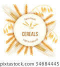 wheat, cereals, barley 34684445