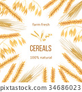 wheat, cereals, barley 34686023