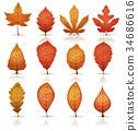 Autumn Leaves Set 34686616
