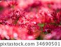 ดอกไม้ป่า,ฤดูใบไม้ร่วง,ดอกไม้ 34690501