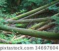 ต้นไม้ลดลง 34697604